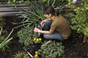 how to gardening
